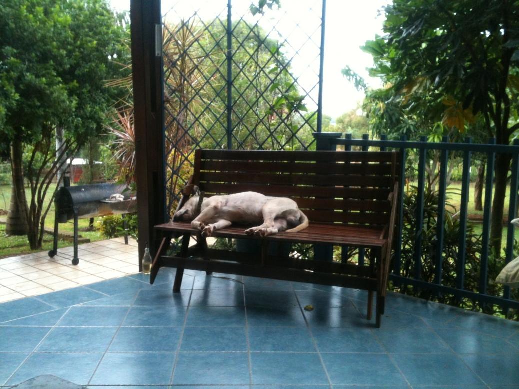 Parche Resting